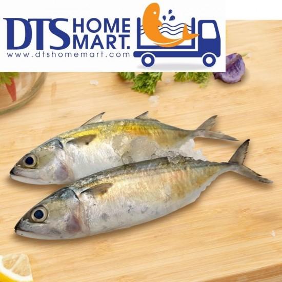 Mackerel Fish/ Ikan Kembung 1kg (13-15pcs)