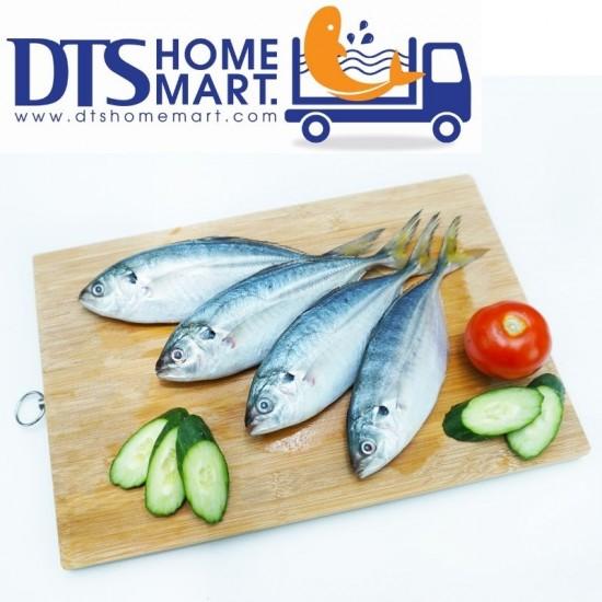 Selar Fish 1kg (5-6pcs)