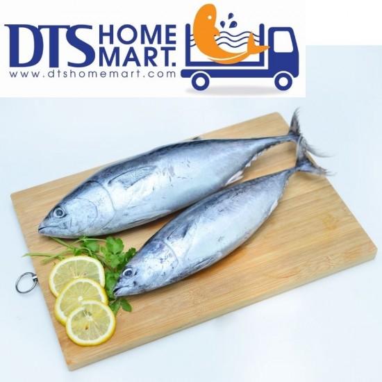 Skipjack Tuna Fish / Ikan Tongkol 1kg (2pcs)