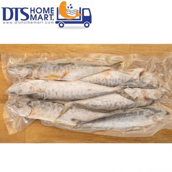 Small Spanish Mackerel / Ikan Tenggiri Kecil 1kg (7-8pcs)